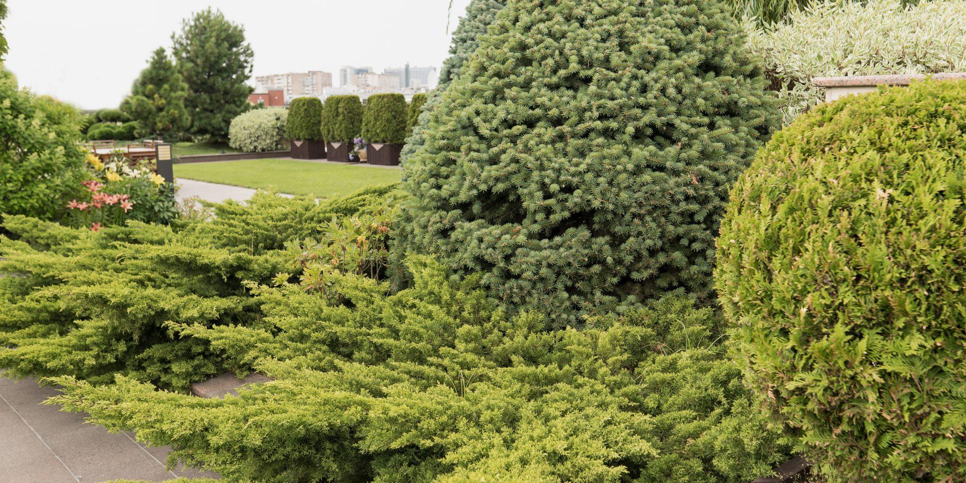 roof_garden_one12